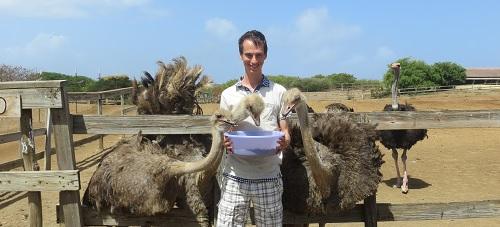 Struisvogels te eten geven op Curacao
