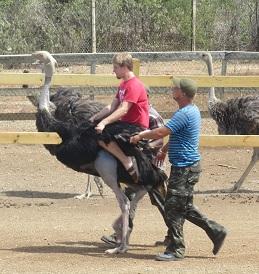 Struisvogelrijden