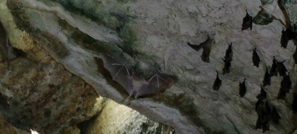 Vleermuizen in de Grotten van Hato